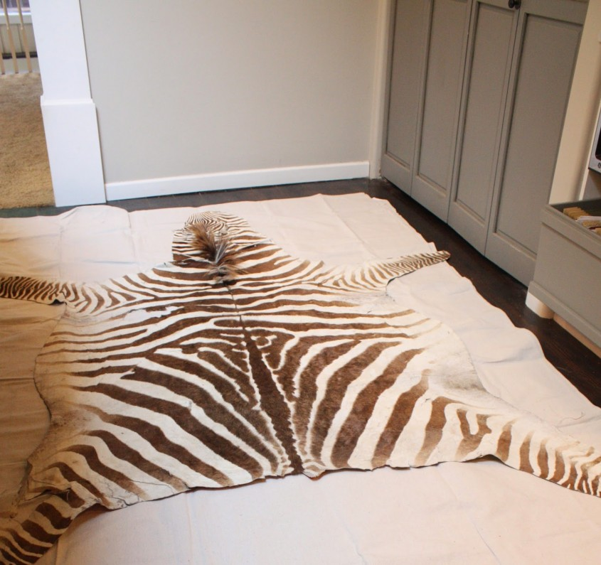 Charming Zebra Rug For Floorings And Rugs Ideas With Zebra Skin Rug